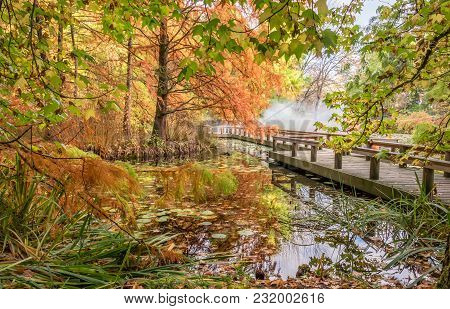 In The Autumn Park With A Pond And Leaves Of Lilies, A Wooden Bridge And White Mist, A Reflection In