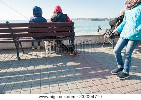 Meeting Of Two Domestic Dogs With Owners In City On Seashore In Spring