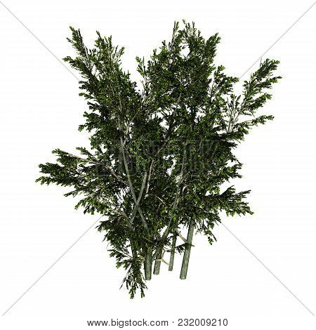 3d Rendering Of A Creosote Bush Or Larrea Tridentata Or Greasewood Or Chaparral Or Gobernadora Isola