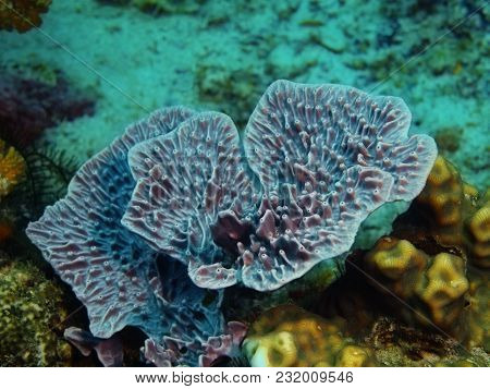 The Amazing And Mysterious Underwater World Of The Philippines, Luzon Island, Anilаo, Demosponge