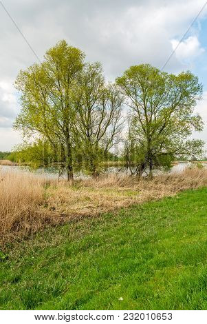 Fresh Green Leaves On Budding Tall Trees At The Banks Of A Creek In A Dutch National Park. It Is A C