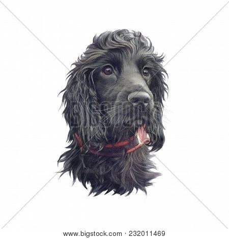 Cocker Spaniel Is A Breed Of Gun Dog. Drawing Of A Black Dog Isolated On White Background. Animal Co