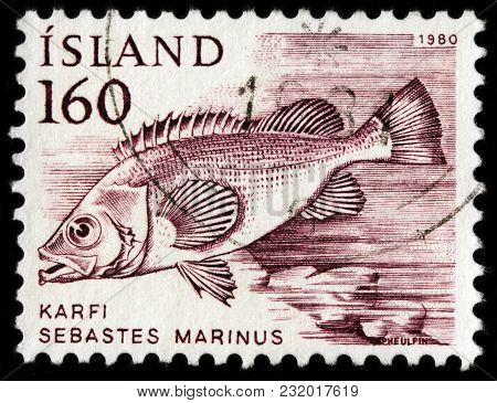 Luga, Russia - January 16, 2018: A Stamp Printed By Iceland Shows Rose Fish, Also Known As Ocean Per