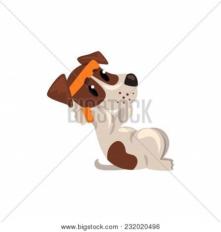 Cute Jack Russell Terrier Athlete Doing Exercises For Press, Funny Sportive Pet Dog Character Vector