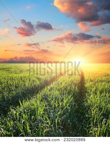 Track In The Field Of Barley At Sunset In Rays Of A Rising Sun, Agriculture Landscape