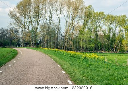 Curved Country Road In A Dutch Rural Landscape In The Spring Season. Wild Plants Bloom Yellow In The