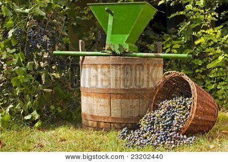 Wine Grape Still Life