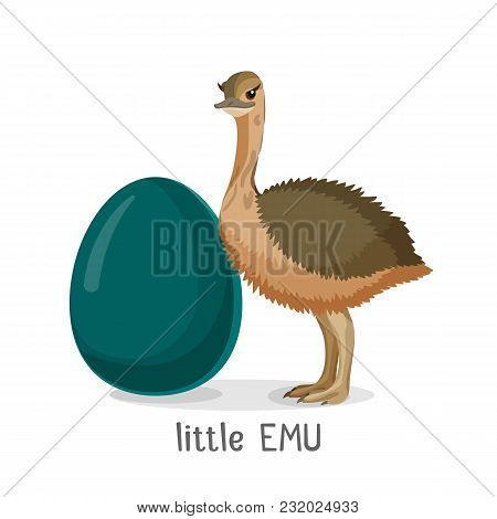 Little Emu Bird Isolated On White Background, Small Chick And Egg, Vector Illustration Of Ostrich Ne