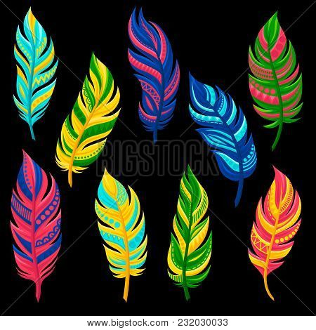 Beautiful Abstract Bright Colored Feathers Set Vector Illustration Isolated On A White Background.