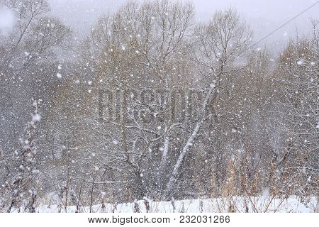 Winter Snowfall Background. Snowflakes Falling On Trees. Snow In Forest.