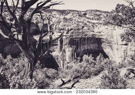 Troglodytic Houses In The Caves Of Navajo National Monument