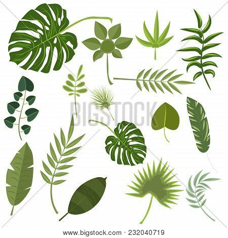 Tropical Leaves Green Jungle. Set Isolated Palm Exotic Leaf Plant Floral Hawaii Botany Decoration Bo