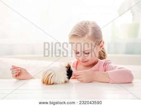 Little girl feeding her guinea pig