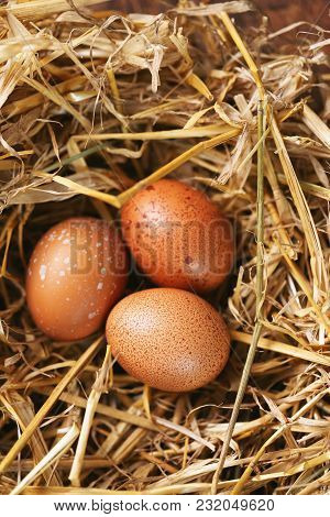 Easter Eggs In  Nest On A Wooden Background