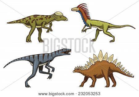 Small Dinosaurs, Deinonychus, Stegosaurus, Velociraptor, Pachycephalosaurus, Skeletons Fossils Prehi