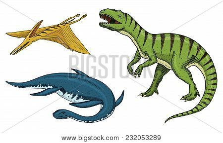 Dinosaurs Tyrannosaurus Rex, Tarbosaurus, Struthiomimus Skeletons, Fossils. Prehistoric Reptiles, An