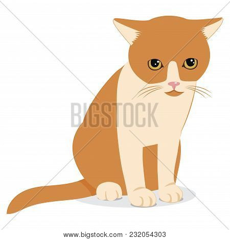 Sad Forlorn Cat. Cartoon Vector Illustration. Lonely Cat Meme. Cat Face Picture. Cat Wants To Come I