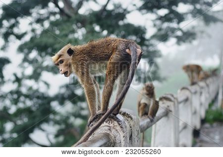 Monkey Sitting And Resting On The Stone