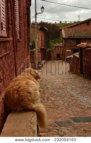 Lovely Golden Dog Resting On A Bench In A Picturesque Village With Black Slate Roofs In Madriguera.