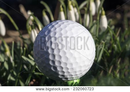 Golf Ball On Green Tee On Golf Course Close To Snowdrops.