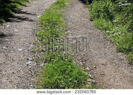 Gravelled Path With Green Medial Strip In Summer, Detail
