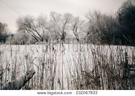 Photo Of Old Grass In Snowy Forest On Winter Day.