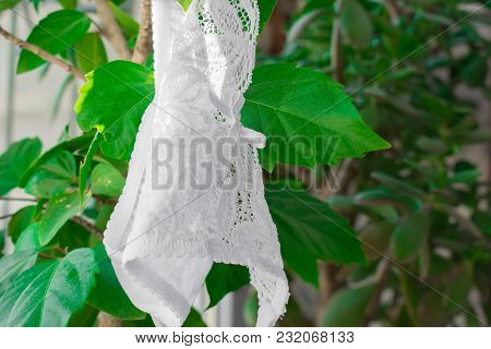 Seductive Openwork White Female Panties In A Composition With A Rose. On A Dark Background With Leav