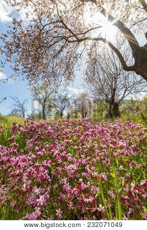 Blossoming Almond Tree Branches And Purple Flowers In A Field During Early Spring In Cyprus