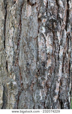 Old Bark, Pine - Tree, Detail, Close-up