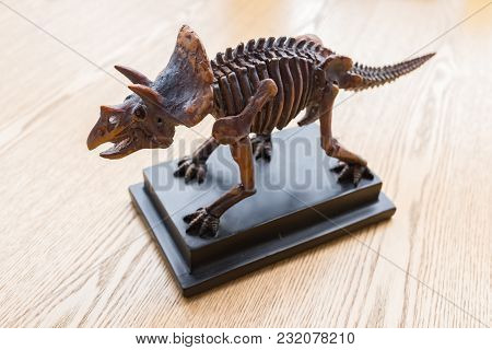 Triceratops Skeleton On A Desk Horizontal Composition