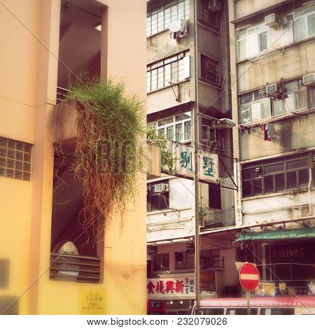 Hong Kong - August 2017: Street view with plant hanging from building in golden light. Kowloon