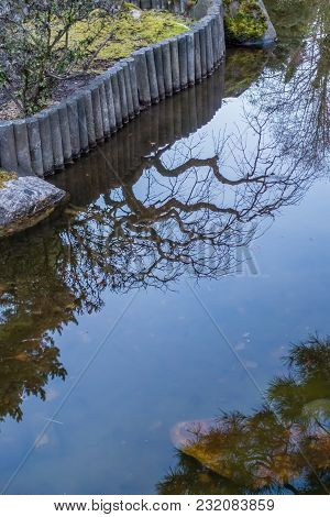 Pond Branches Reflection