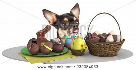Cute Dog Chihuahua Make An Effort Above Table And Looking To The Easter Eggs