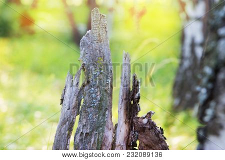 Amazing Blur Scenic Wild Nature Pastel Green Yellow Background Selective Focus