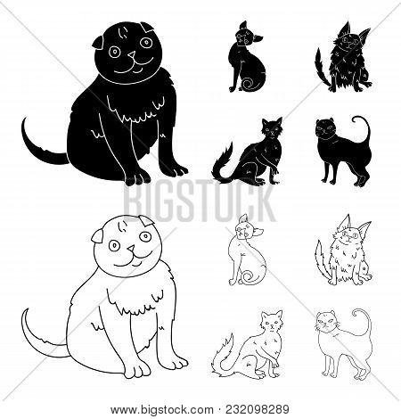 Turkish Angora, British Longhair And Other Species. Cat Breeds Set Collection Icons In Black, Outlin