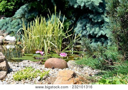 Decorative Garden Pond With Water Lilies, Rocks, Water Plants And Trees