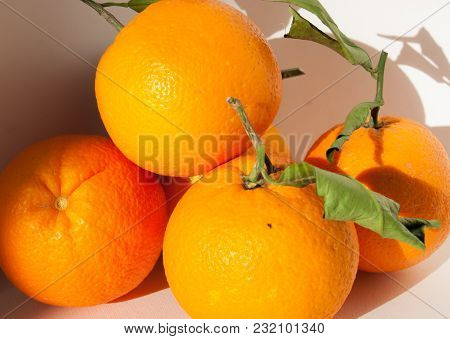 Close Up Of  5 Italian And Biological Oranges