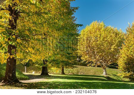 Colorful Trees In An Italian Park On A Sunny Day In Autumn