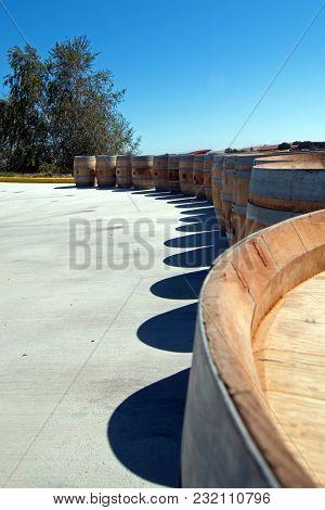 Oak Wine Barrels Lined Up Next To Tree