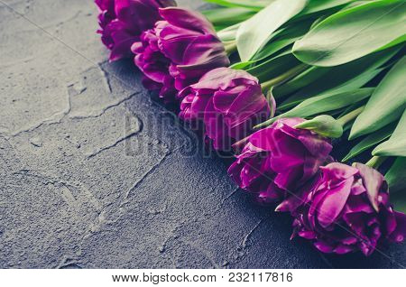 Purple Ultraviolet Tulips On Black Background With Place For Text. Valentines, Mothers, Womens Day A