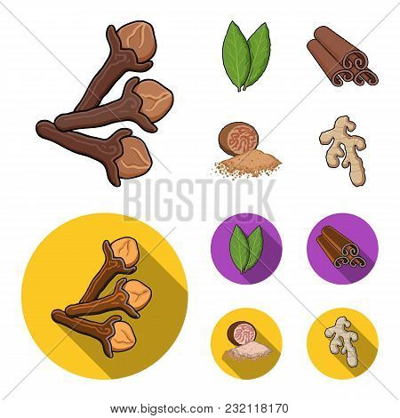 Clove, Bay Leaf, Nutmeg, Cinnamon.herbs And Spices Set Collection Icons In Cartoon, Flat Style Vecto