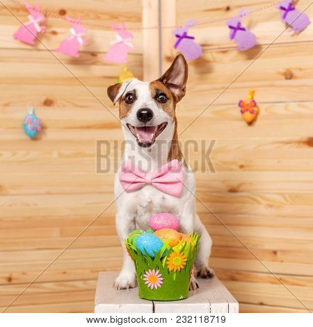Easter celebration. Dog with basket with Easter eggs. Happy pet