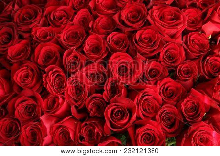 Close-up Of A Beautiful Bouquet Of Red Roses. Isolated On White Background