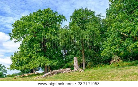 Woodland In The English Countryside In Summer