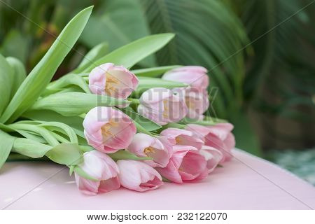 Tender Bouquet Of Pink Tulips With Green Leaves. Spring Flowers, Romantic Floral Background For Wedd