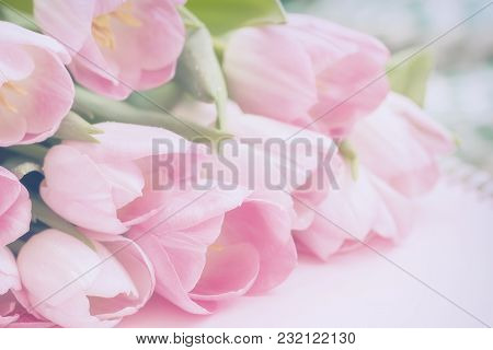Light Tender Background Tulips With Raindrops, Soft Spring Romantic Floral Backdrop For Wedding, Bir