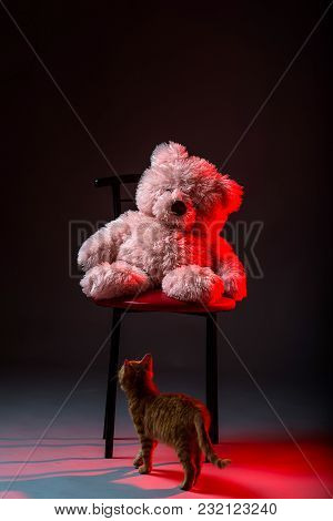 Pink Bear Sitting In A Chair. Small Red Kitten And A Teddy Bear On A Gray Background.