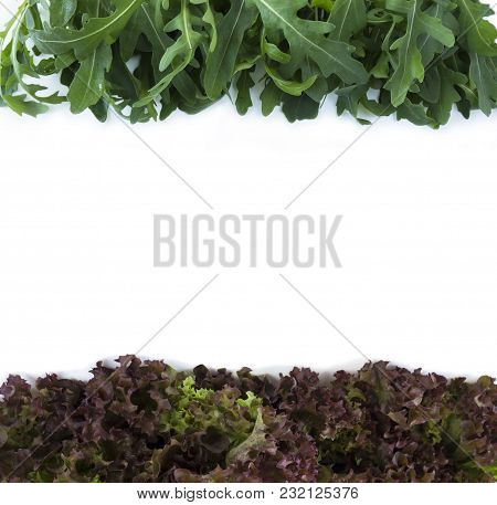Top View. Lettuce And Arugula At Border Of Image With Copy Space For Text. Lettuce On White Backgrou