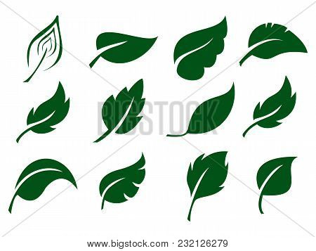 Leaves Icon Vector Set Isolated On White Background. Various Shapes Of Green Leaves Of Trees And Pla