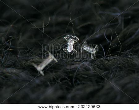 Three Snowflakes Glowing On Dark Textured Background. Macro Photo Of Real Snow Crystals: Small Cappe